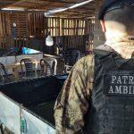 Riña de Gallos en Córdoba, detuvieron a 7 personas